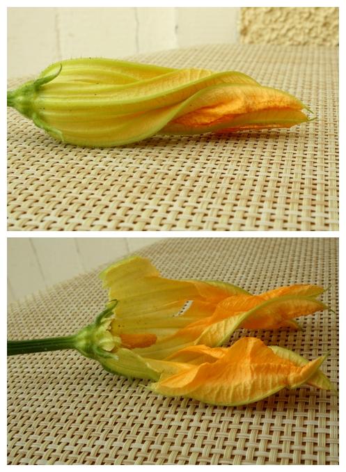 fleur courgettes